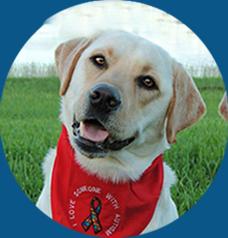 Fort Worth Dog Training Schools