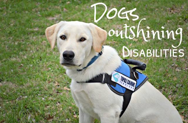 Service Dogs Outshining Disabilities