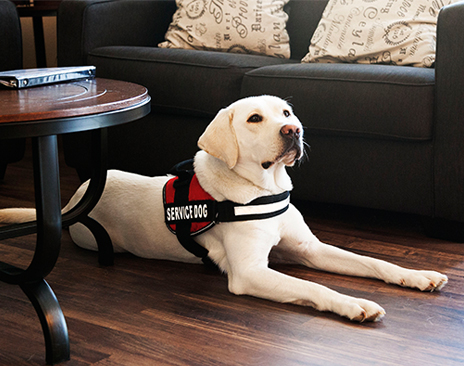 Service Dogs can retrieve medication for the partner during a medical crisis